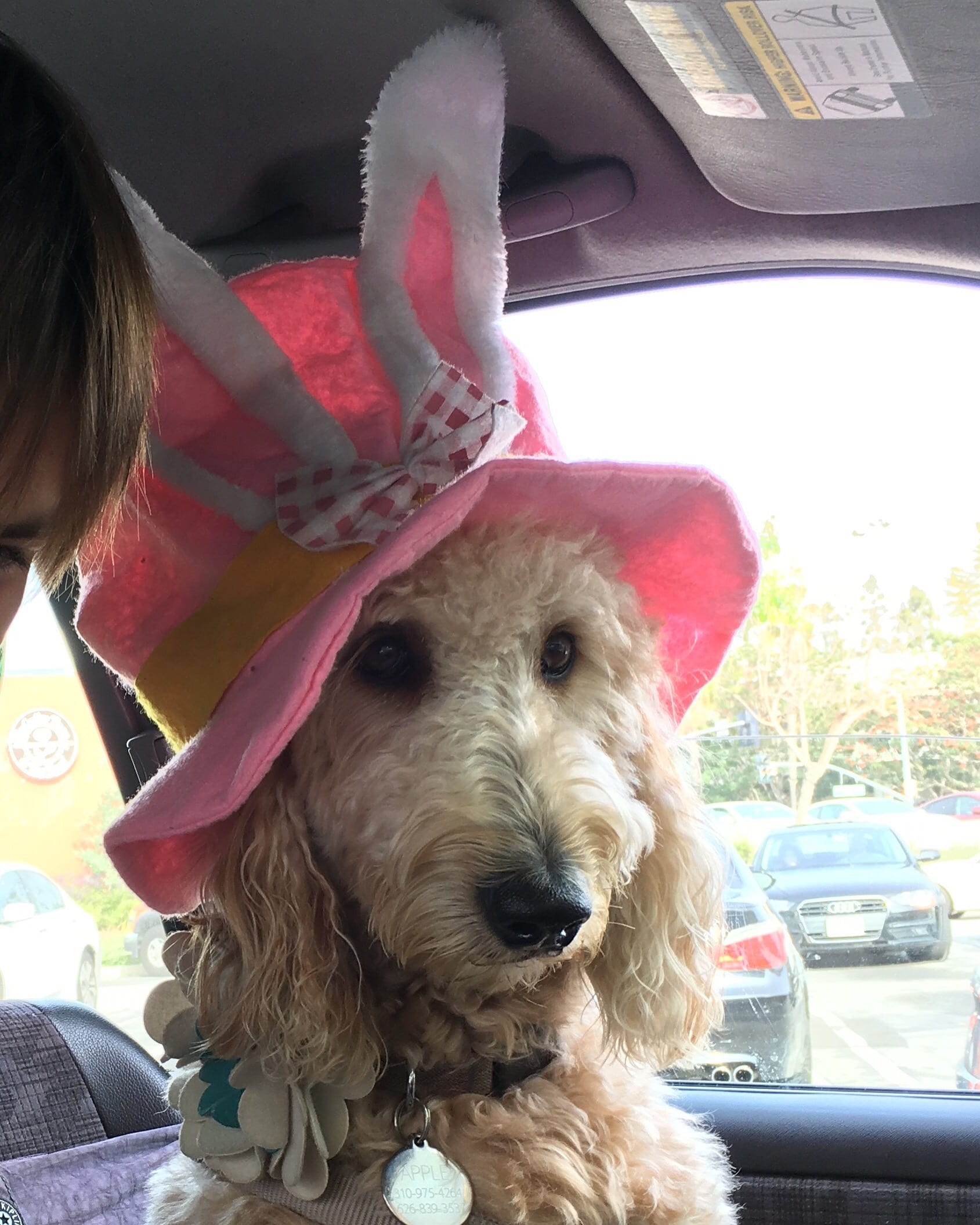 picture of apple the golden doodle wearing easter bunny ears