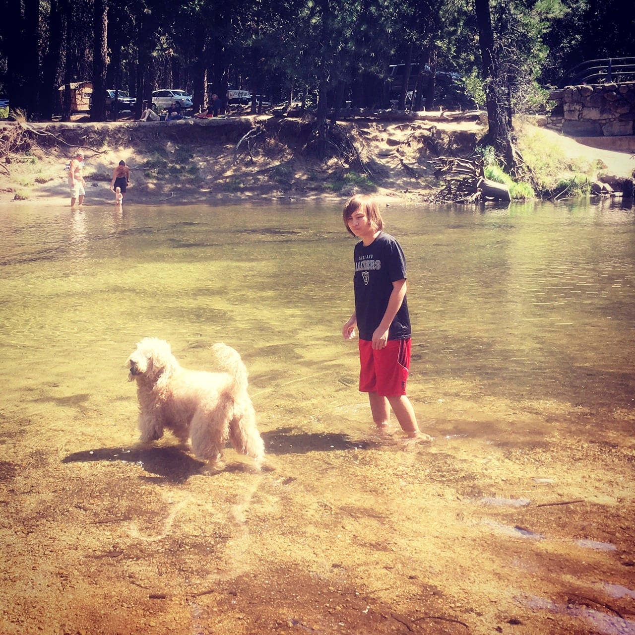 picture of yosemite lake of a goldendoodle walking in the water